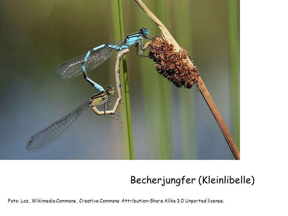 Kleinlibellenlarve Bild:Landesbildungsserver Basen-Württemberg