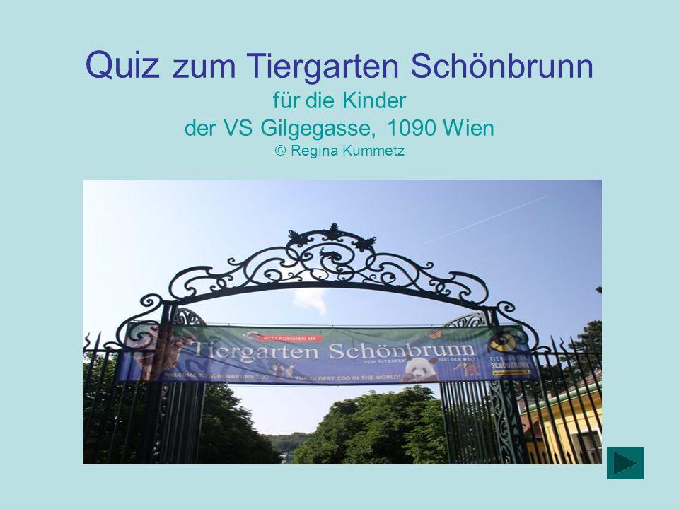 Quiz zum Tiergarten Schönbrunn für die Kinder der VS Gilgegasse, 1090 Wien © Regina Kummetz
