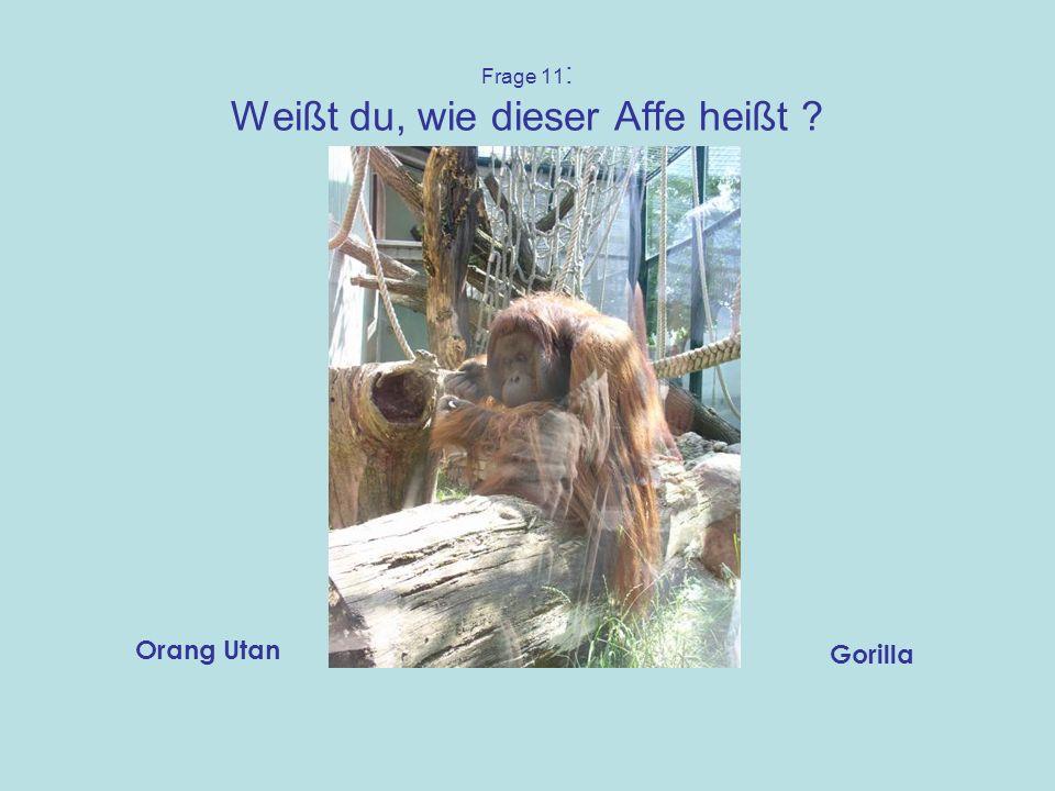 Frage 10: Wie heißt dieses Tier ? GittertierLöwe