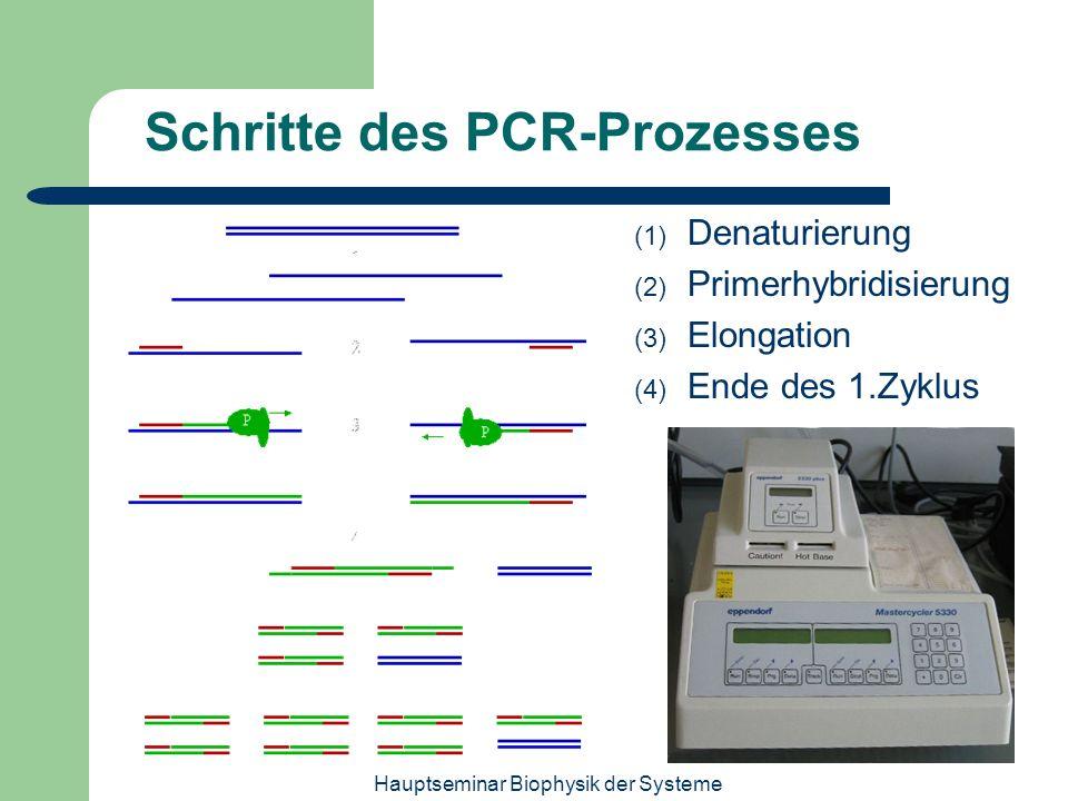 Hauptseminar Biophysik der Systeme Schritte des PCR-Prozesses (1) Denaturierung (2) Primerhybridisierung (3) Elongation (4) Ende des 1.Zyklus