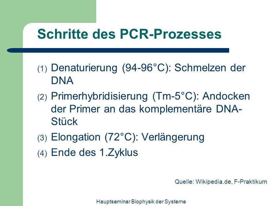 Hauptseminar Biophysik der Systeme Schritte des PCR-Prozesses (1) Denaturierung (94-96°C): Schmelzen der DNA (2) Primerhybridisierung (Tm-5°C): Andock