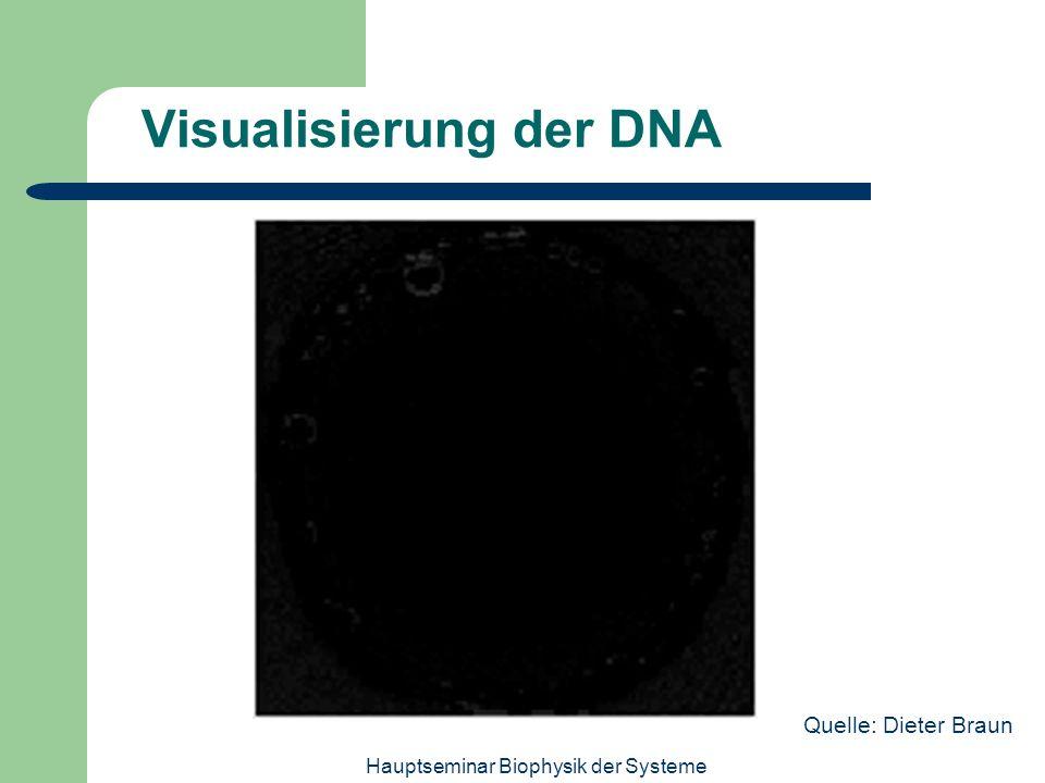 Hauptseminar Biophysik der Systeme Visualisierung der DNA Quelle: Dieter Braun