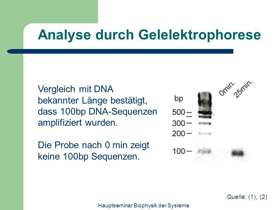 Hauptseminar Biophysik der Systeme Analyse durch Gelelektrophorese Vergleich mit DNA bekannter Länge bestätigt, dass 100bp DNA-Sequenzen amplifiziert