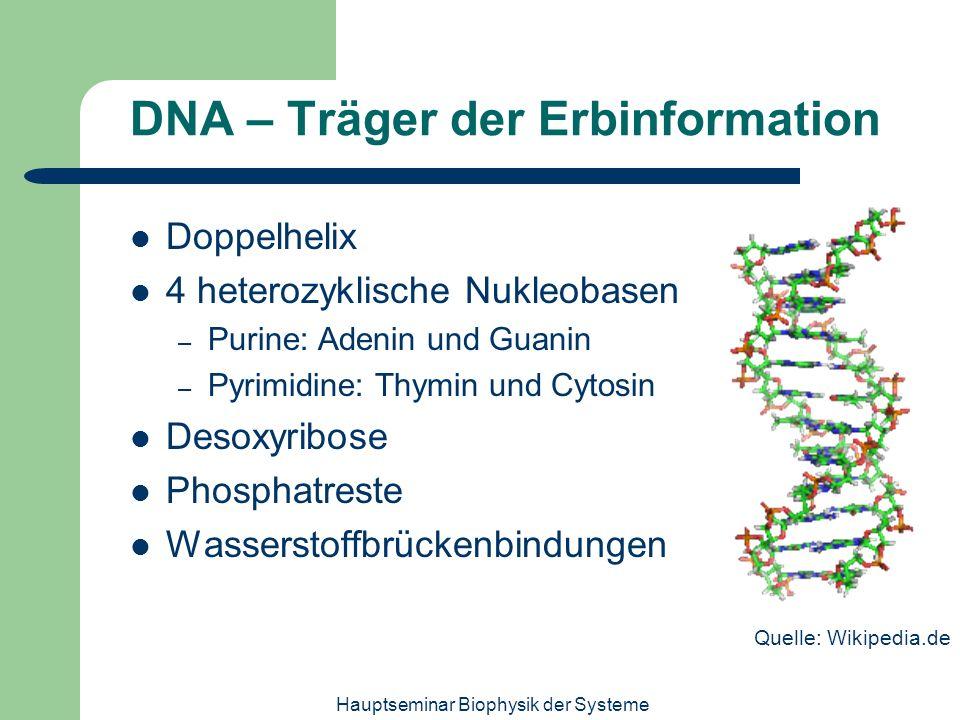 Hauptseminar Biophysik der Systeme DNA – Träger der Erbinformation Doppelhelix 4 heterozyklische Nukleobasen – Purine: Adenin und Guanin – Pyrimidine: