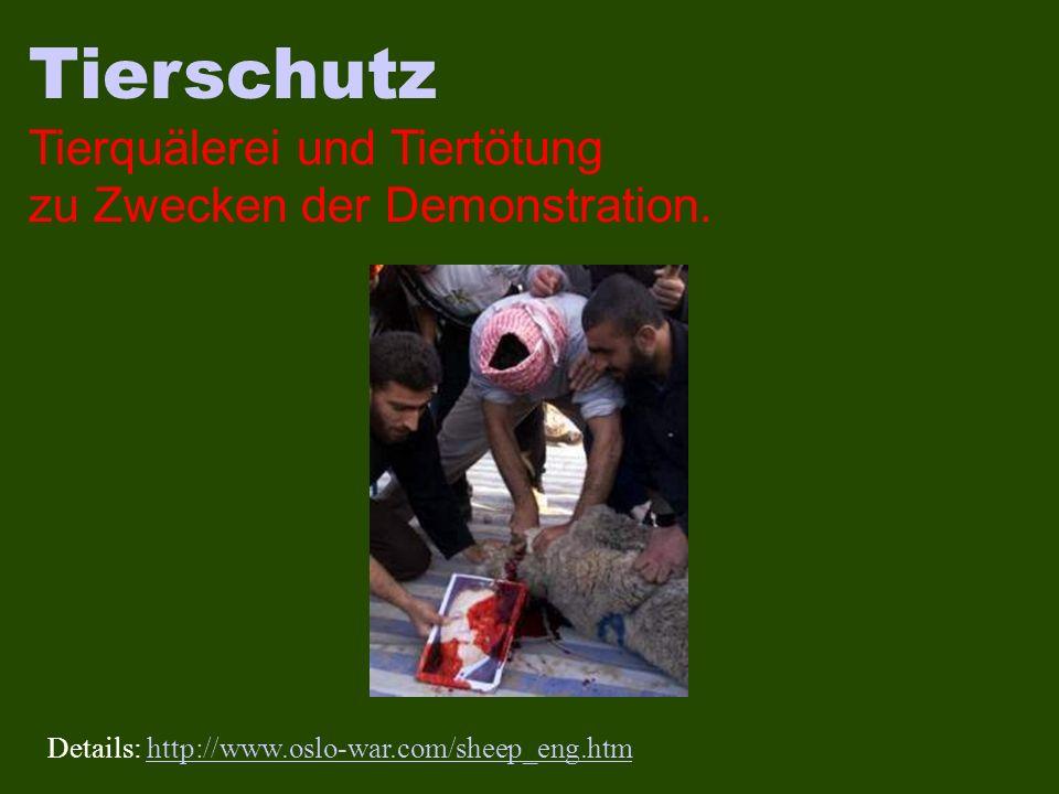 Tierschutz Tierquälerei und Tiertötung zu Zwecken der Demonstration. Details: http://www.oslo-war.com/sheep_eng.htmhttp://www.oslo-war.com/sheep_eng.h