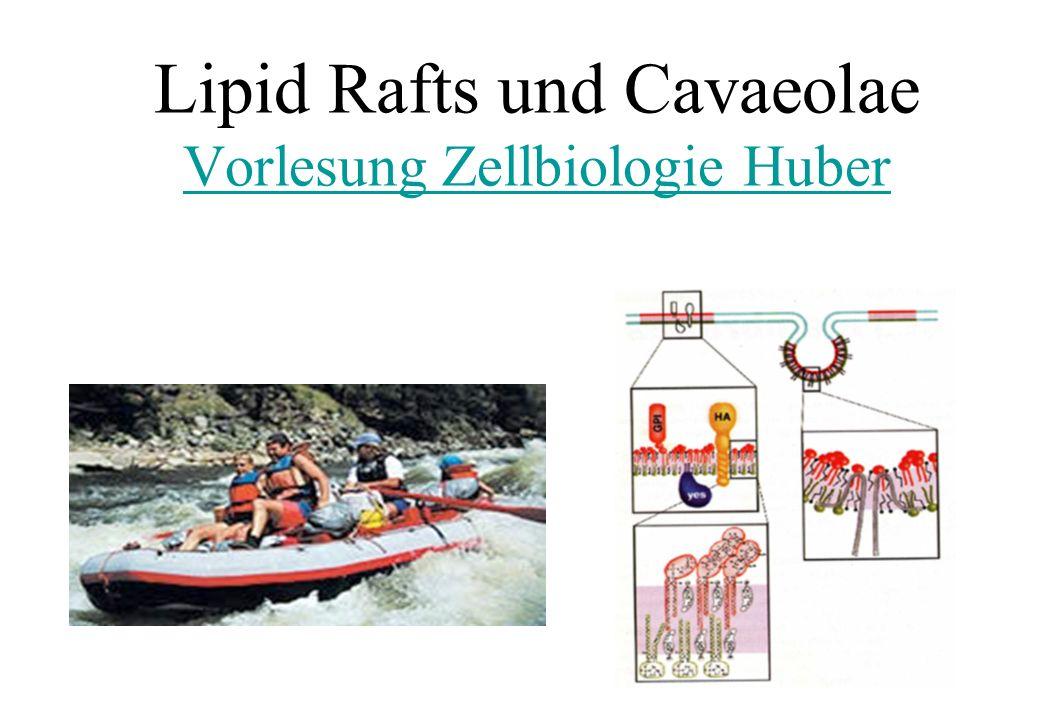 Lipid Rafts und Cavaeolae Vorlesung Zellbiologie Huber Vorlesung Zellbiologie Huber