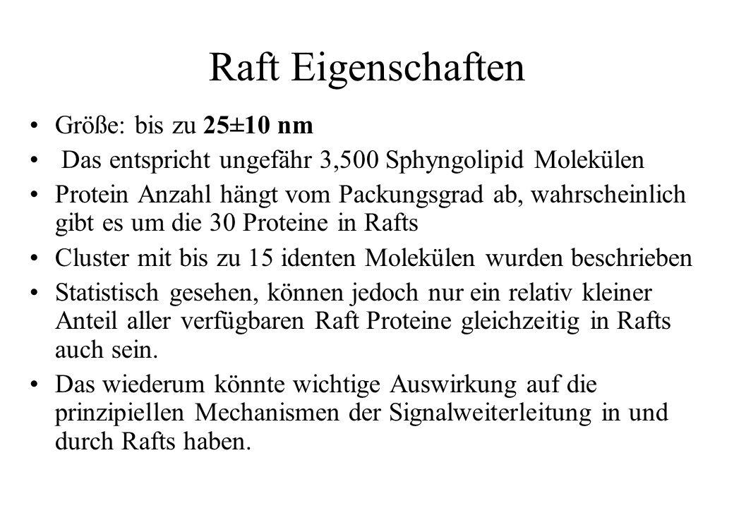 Raft Eigenschaften Größe: bis zu 25±10 nm Das entspricht ungefähr 3,500 Sphyngolipid Molekülen Protein Anzahl hängt vom Packungsgrad ab, wahrscheinlic