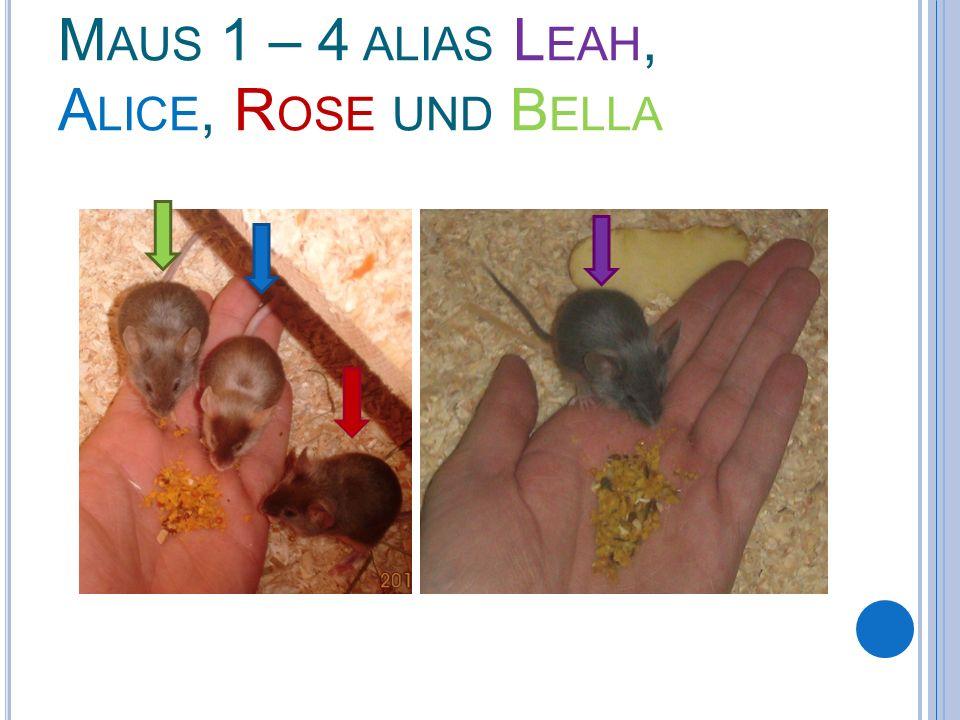 M AUS 1 – 4 ALIAS L EAH, A LICE, R OSE UND B ELLA