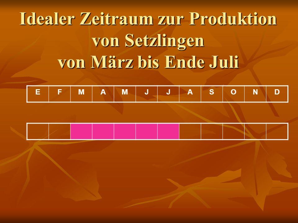 Idealer Zeitraum zur Produktion von Setzlingen von März bis Ende Juli EFMAMJJASOND