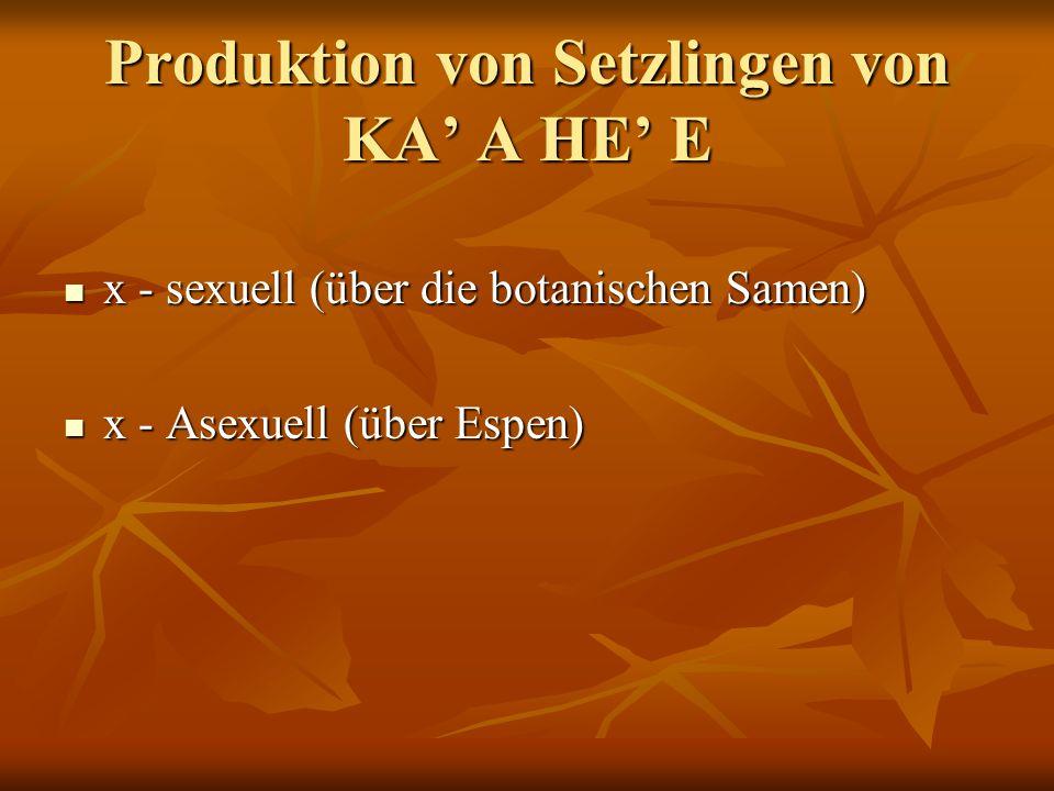Produktion von Setzlingen von KA A HE E x - sexuell (über die botanischen Samen) x - sexuell (über die botanischen Samen) x - Asexuell (über Espen) x - Asexuell (über Espen)