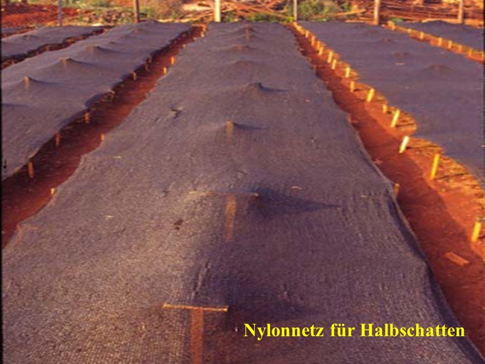 Nylonnetz für Halbschatten