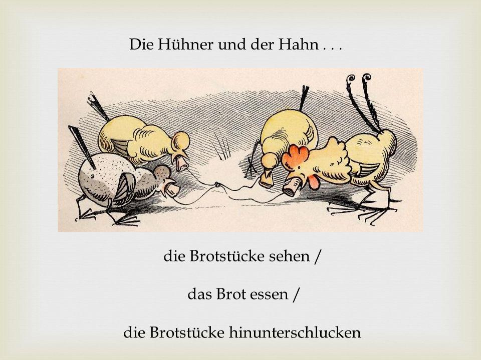 Die Hühner und der Hahn... die Brotstücke sehen / das Brot essen / die Brotstücke hinunterschlucken