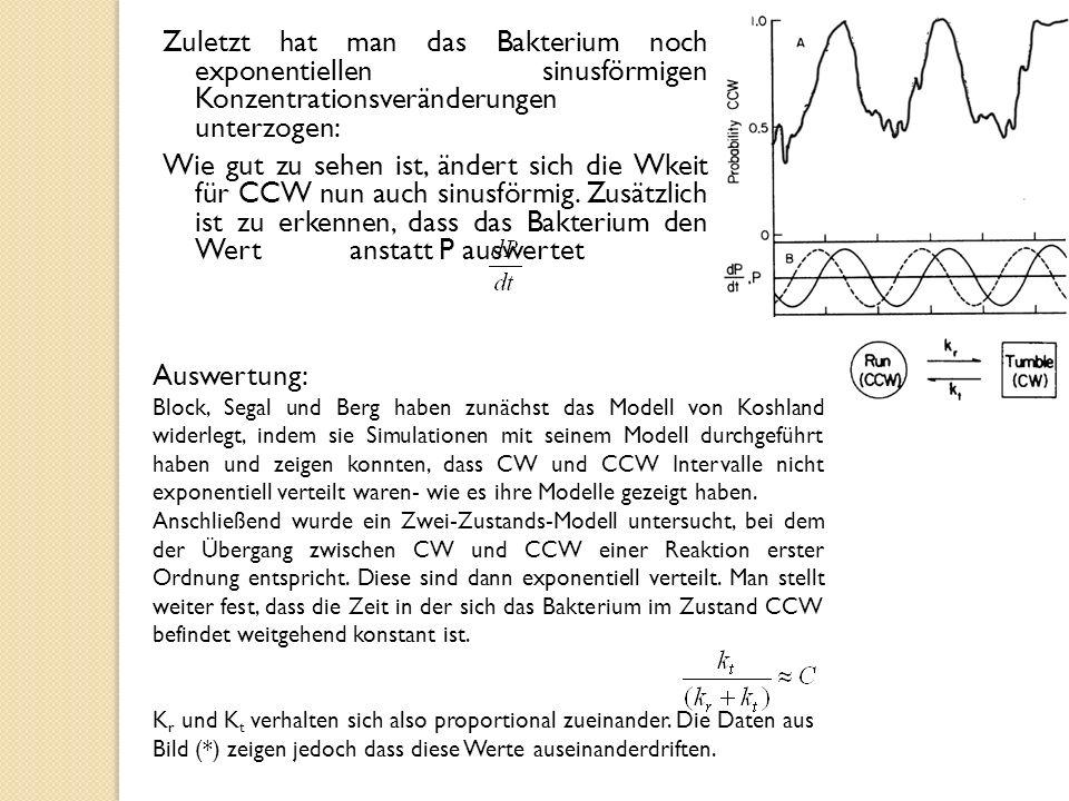 Zuletzt hat man das Bakterium noch exponentiellen sinusförmigen Konzentrationsveränderungen unterzogen: Wie gut zu sehen ist, ändert sich die Wkeit für CCW nun auch sinusförmig.