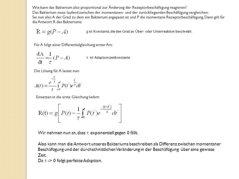 Wie kann das Bakterium also proportional zur Änderung der Rezeptorbeschäftigung reagieren.