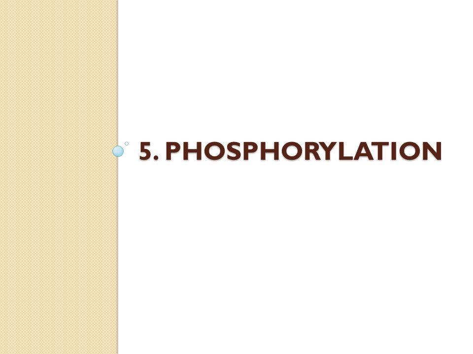 5. PHOSPHORYLATION