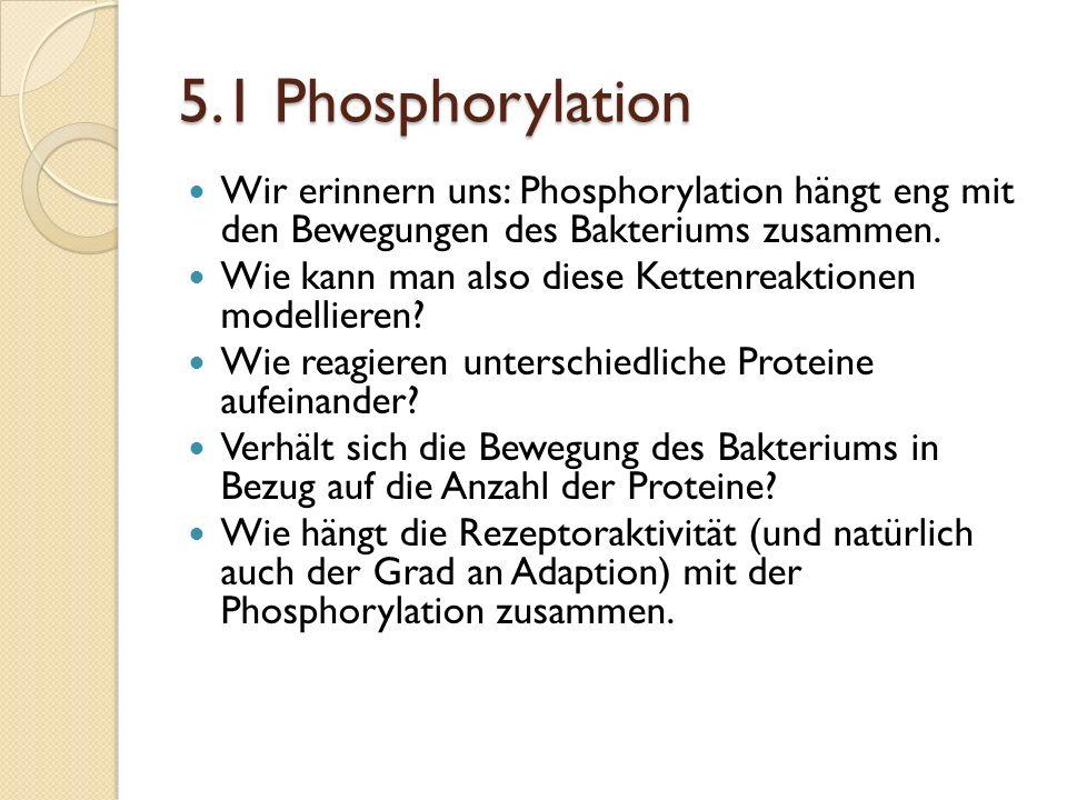 5.1 Phosphorylation Wir erinnern uns: Phosphorylation hängt eng mit den Bewegungen des Bakteriums zusammen.