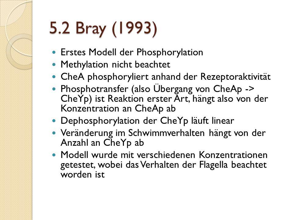 5.2 Bray (1993) Erstes Modell der Phosphorylation Methylation nicht beachtet CheA phosphoryliert anhand der Rezeptoraktivität Phosphotransfer (also Übergang von CheAp -> CheYp) ist Reaktion erster Art, hängt also von der Konzentration an CheAp ab Dephosphorylation der CheYp läuft linear Veränderung im Schwimmverhalten hängt von der Anzahl an CheYp ab Modell wurde mit verschiedenen Konzentrationen getestet, wobei das Verhalten der Flagella beachtet worden ist