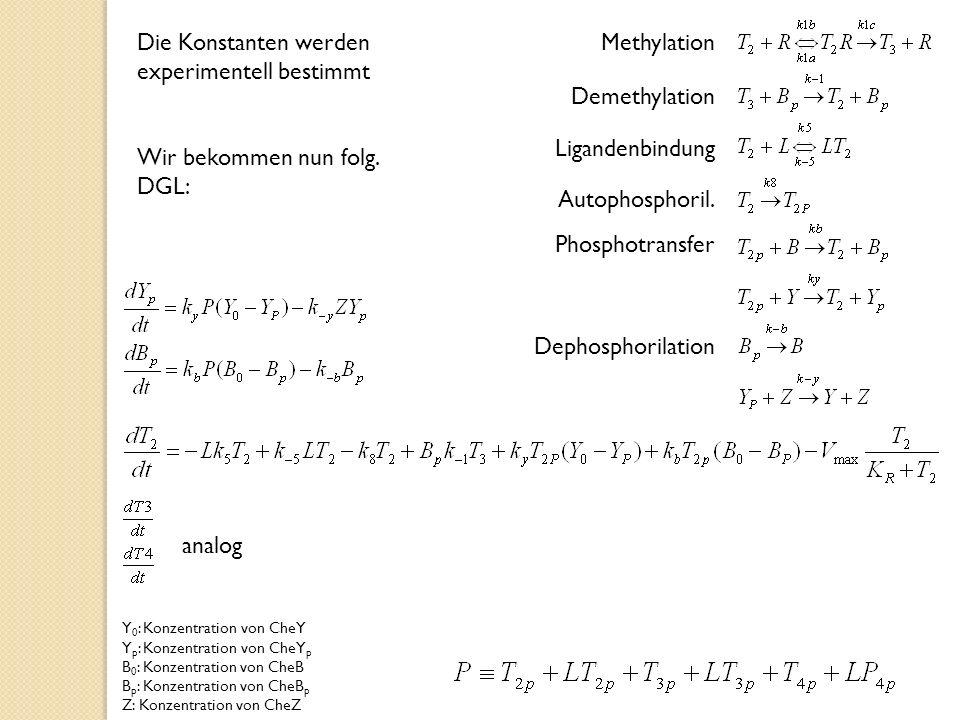 Methylation Demethylation Ligandenbindung Autophosphoril.