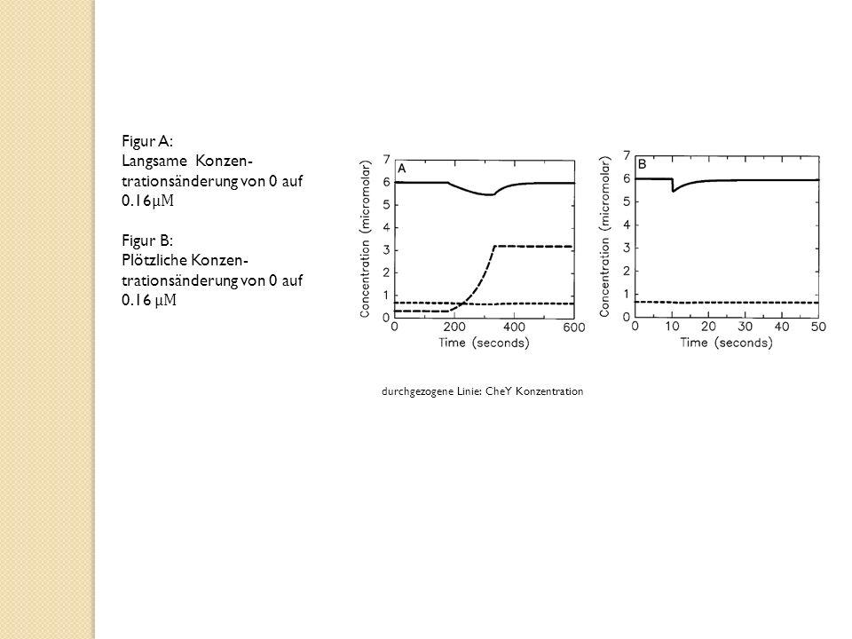 Figur A: Langsame Konzen- trationsänderung von 0 auf 0.16 μM Figur B: Plötzliche Konzen- trationsänderung von 0 auf 0.16 μM durchgezogene Linie: CheY Konzentration
