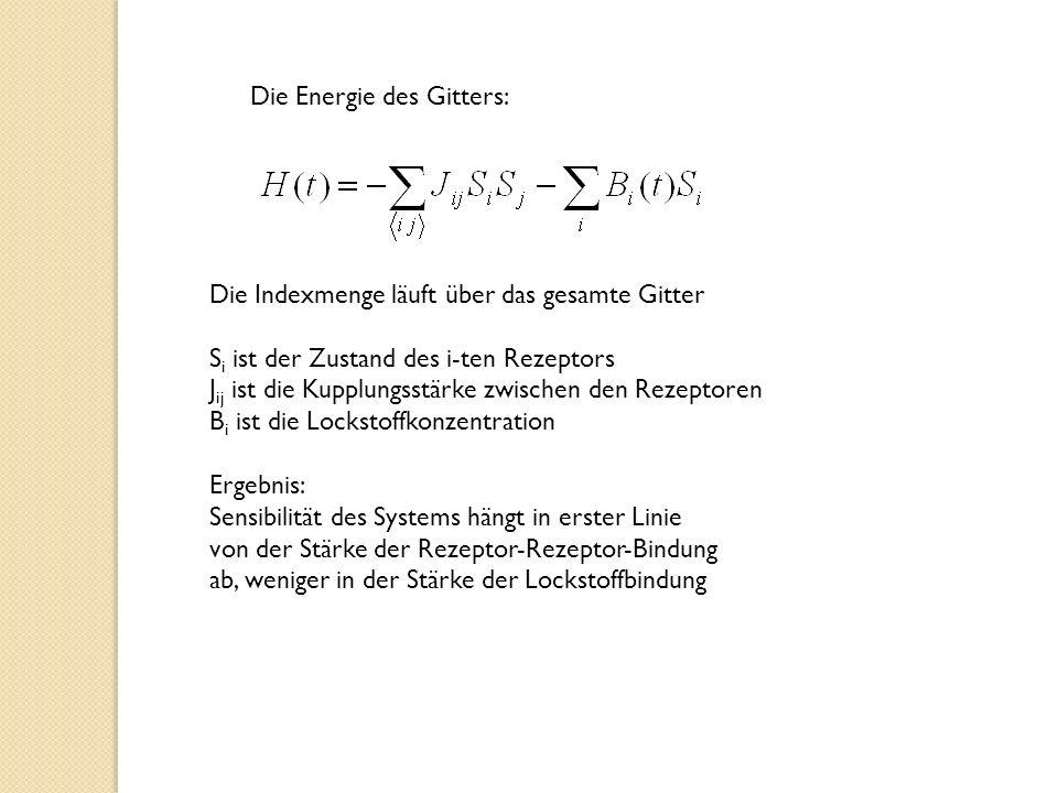 Die Energie des Gitters: Die Indexmenge läuft über das gesamte Gitter S i ist der Zustand des i-ten Rezeptors J ij ist die Kupplungsstärke zwischen den Rezeptoren B i ist die Lockstoffkonzentration Ergebnis: Sensibilität des Systems hängt in erster Linie von der Stärke der Rezeptor-Rezeptor-Bindung ab, weniger in der Stärke der Lockstoffbindung
