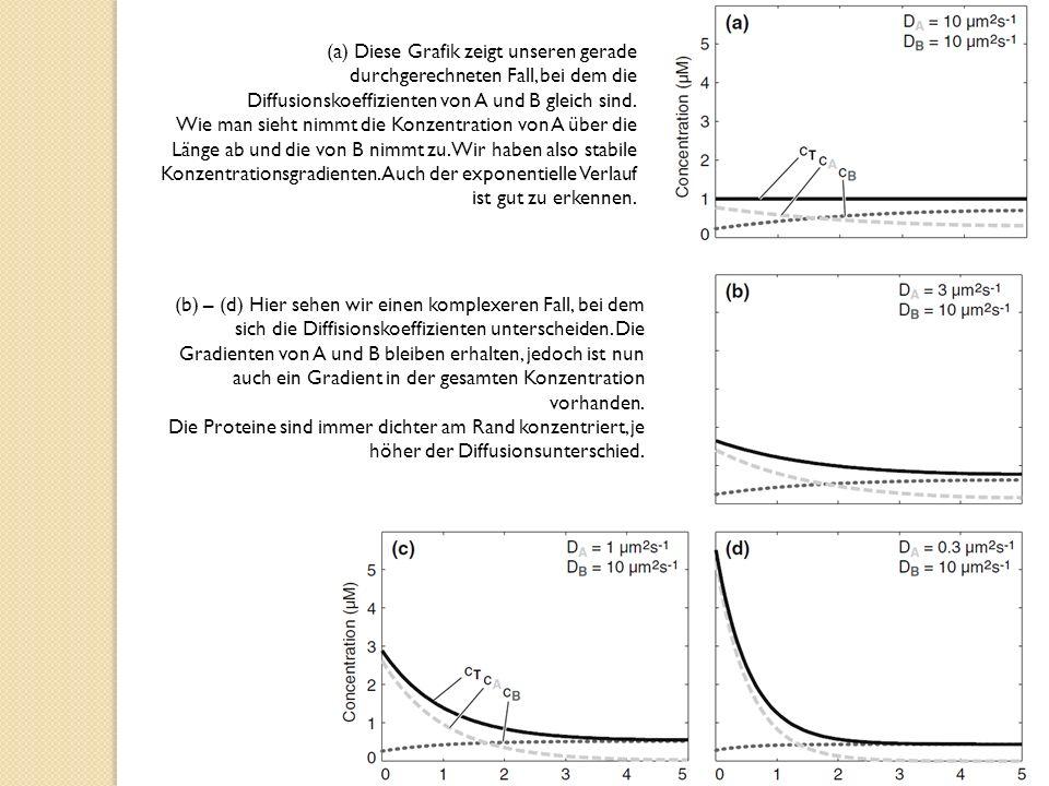 (a) Diese Grafik zeigt unseren gerade durchgerechneten Fall, bei dem die Diffusionskoeffizienten von A und B gleich sind.