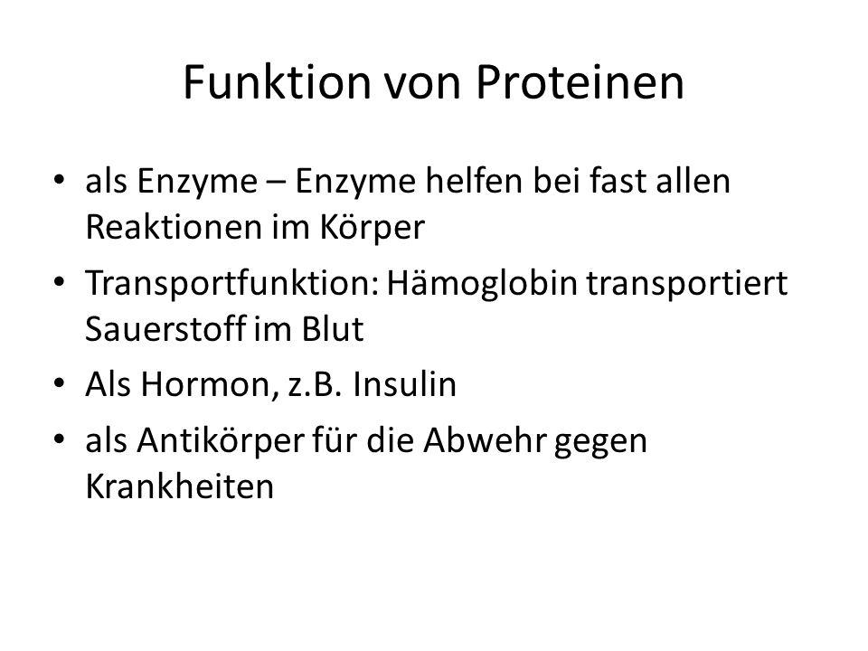 Funktion von Proteinen als Enzyme – Enzyme helfen bei fast allen Reaktionen im Körper Transportfunktion: Hämoglobin transportiert Sauerstoff im Blut Als Hormon, z.B.