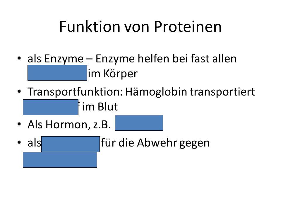 Funktion von Proteinen als Enzyme – Enzyme helfen bei fast allen Reaktionen im Körper Transportfunktion: Hämoglobin transportiert Sauerstoff im Blut A