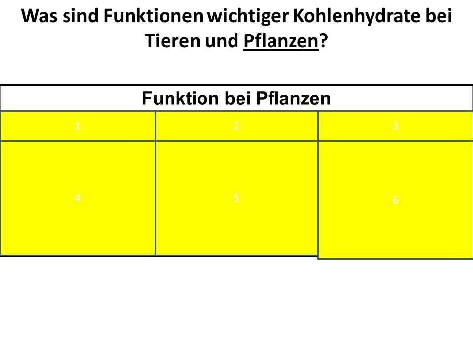 Was sind Funktionen wichtiger Kohlenhydrate bei Tieren und Pflanzen? Funktion bei Pflanzen FruktoseSaccharoseZellulose ATP- Gewinnung durch Zellatmung