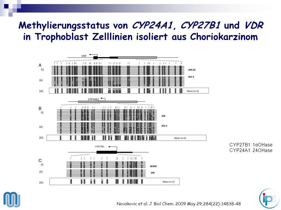Methylierungsstatus von CYP24A1, CYP27B1 und VDR in Trophoblast Zelllinien isoliert aus Choriokarzinom Novakovic et al. J Biol Chem. 2009 May 29;284(2