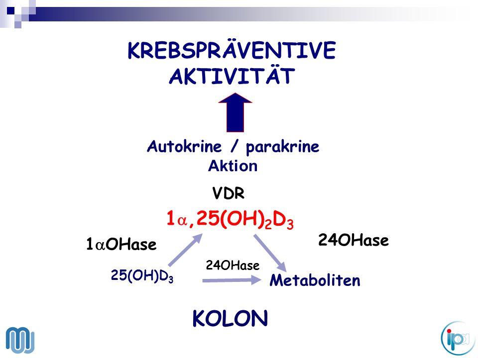 KOLON 25(OH)D 3 Metaboliten 24OHase 1 OHase KREBSPRÄVENTIVE AKTIVITÄT Autokrine / parakrine Aktion VDR 1,25(OH) 2 D 3