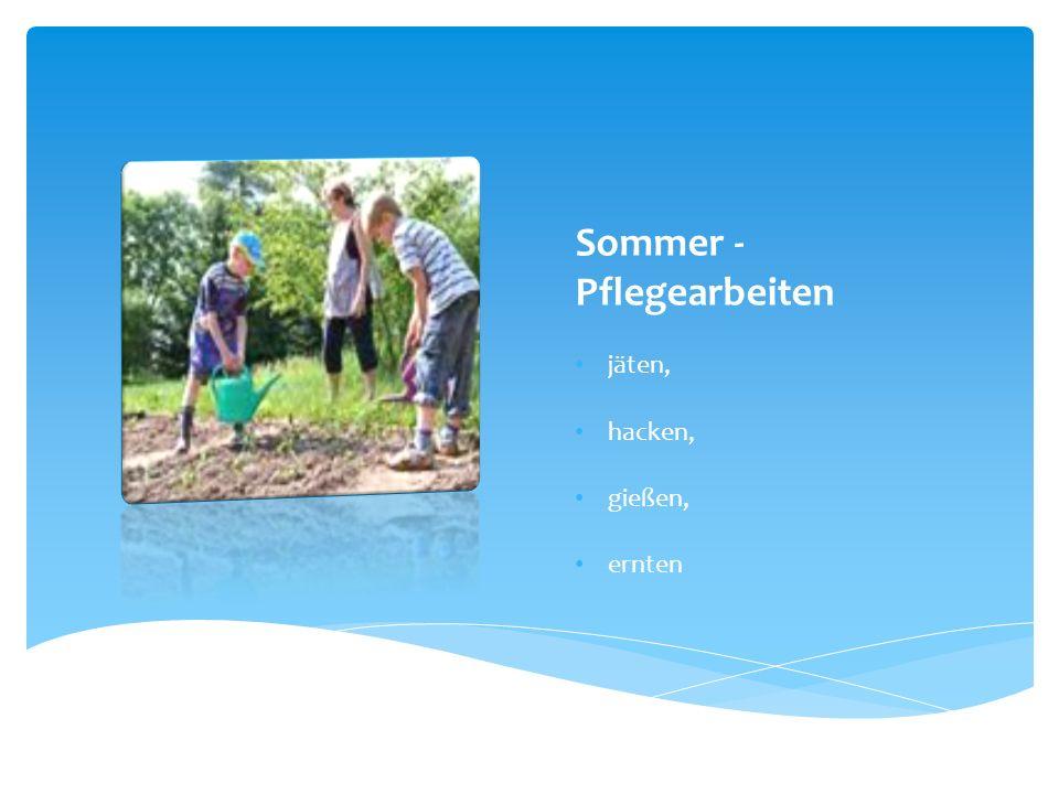 Sommer - Pflegearbeiten jäten, hacken, gießen, ernten