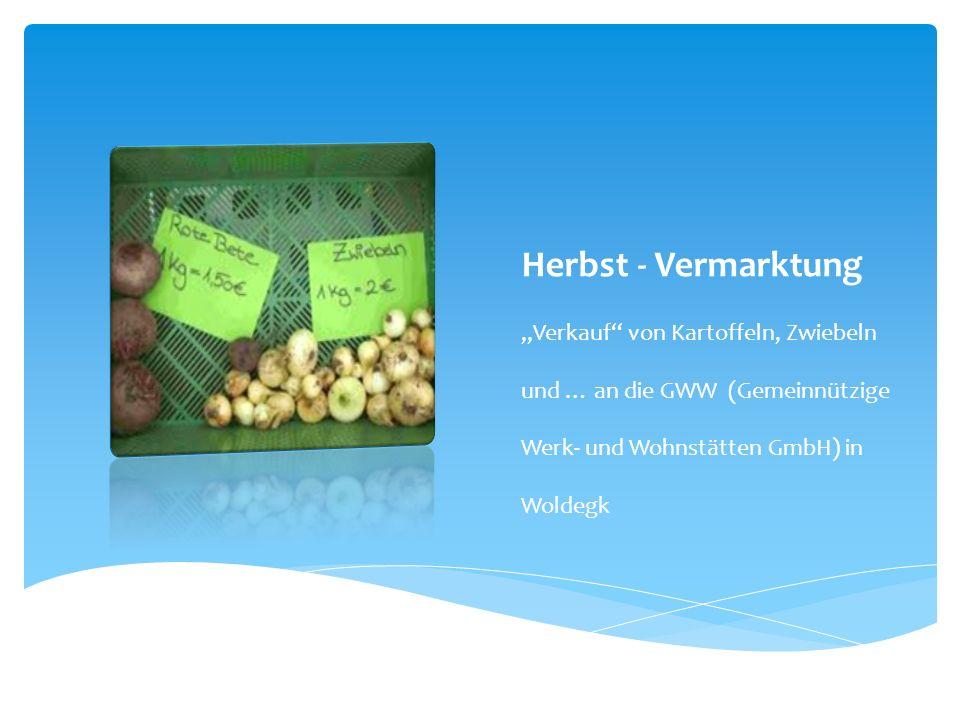 Herbst - Vermarktung Verkauf von Kartoffeln, Zwiebeln und … an die GWW (Gemeinnützige Werk- und Wohnstätten GmbH) in Woldegk