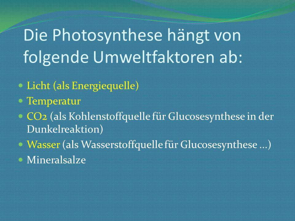 Die Photosynthese hängt von folgende Umweltfaktoren ab: Licht (als Energiequelle) Temperatur CO2 (als Kohlenstoffquelle für Glucosesynthese in der Dunkelreaktion) Wasser (als Wasserstoffquelle für Glucosesynthese...) Mineralsalze