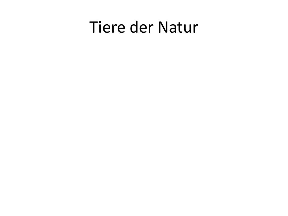 Tiere der Natur