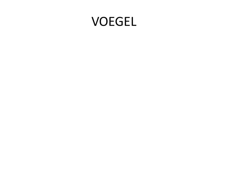VOEGEL