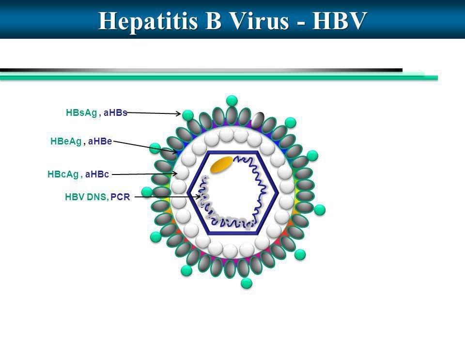 Hepatitis B Virus - HBV HBsAg, aHBs HBV DNS, PCR HBeAg, aHBe HBcAg, aHBc