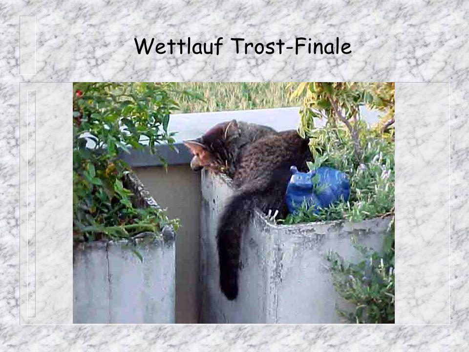 Wettlauf Trost-Finale