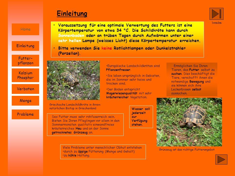 beenden Home Probleme Futter- pflanzen Einleitung Kalzium Phosphor Verboten Menge Europäische Landschildkröten sind Pflanzenfresser. Sie leben ursprün