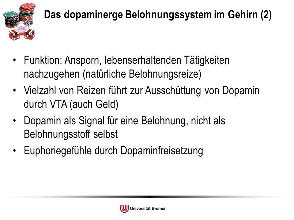 Funktion: Ansporn, lebenserhaltenden Tätigkeiten nachzugehen (natürliche Belohnungsreize) Vielzahl von Reizen führt zur Ausschüttung von Dopamin durch VTA (auch Geld) Dopamin als Signal für eine Belohnung, nicht als Belohnungsstoff selbst Euphoriegefühle durch Dopaminfreisetzung Das dopaminerge Belohnungssystem im Gehirn (2)