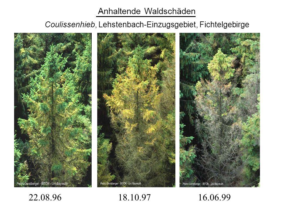 22.08.9616.06.9918.10.97 Anhaltende Waldschäden Coulissenhieb, Lehstenbach-Einzugsgebiet, Fichtelgebirge