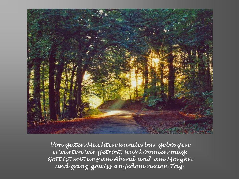 Noch will das alte unsre Herzen quälen, noch drückt uns böser Tage schwere Last, Ach Herr, gib unsern aufgescheuchten Seelen das Heil, für das Du uns