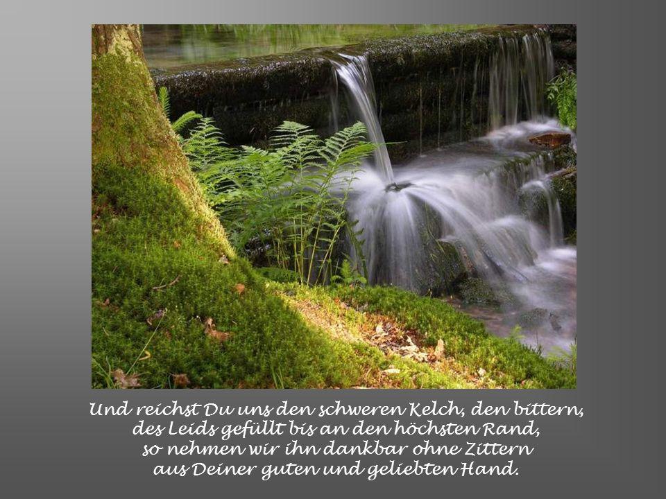 Von guten Mächten wunderbar geborgen erwarten wir getrost, was kommen mag. Gott ist mit uns am Abend und am Morgen und ganz gewiss an jedem neuen Tag.