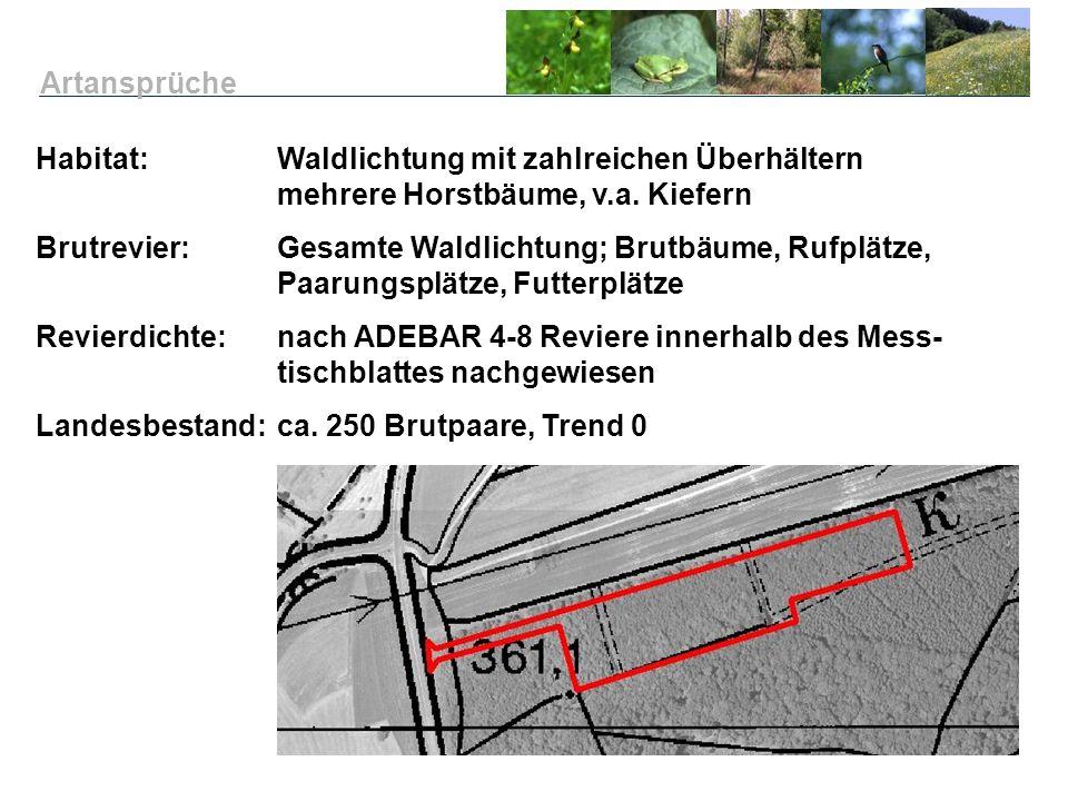 Habitat: Waldlichtung mit zahlreichen Überhältern mehrere Horstbäume, v.a. Kiefern Brutrevier:Gesamte Waldlichtung; Brutbäume, Rufplätze, Paarungsplät
