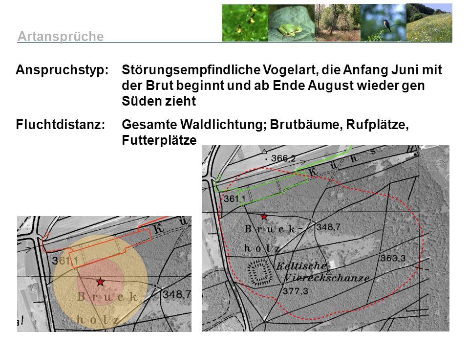 Anspruchstyp: Störungsempfindliche Vogelart, die Anfang Juni mit der Brut beginnt und ab Ende August wieder gen Süden zieht Fluchtdistanz:Gesamte Wald