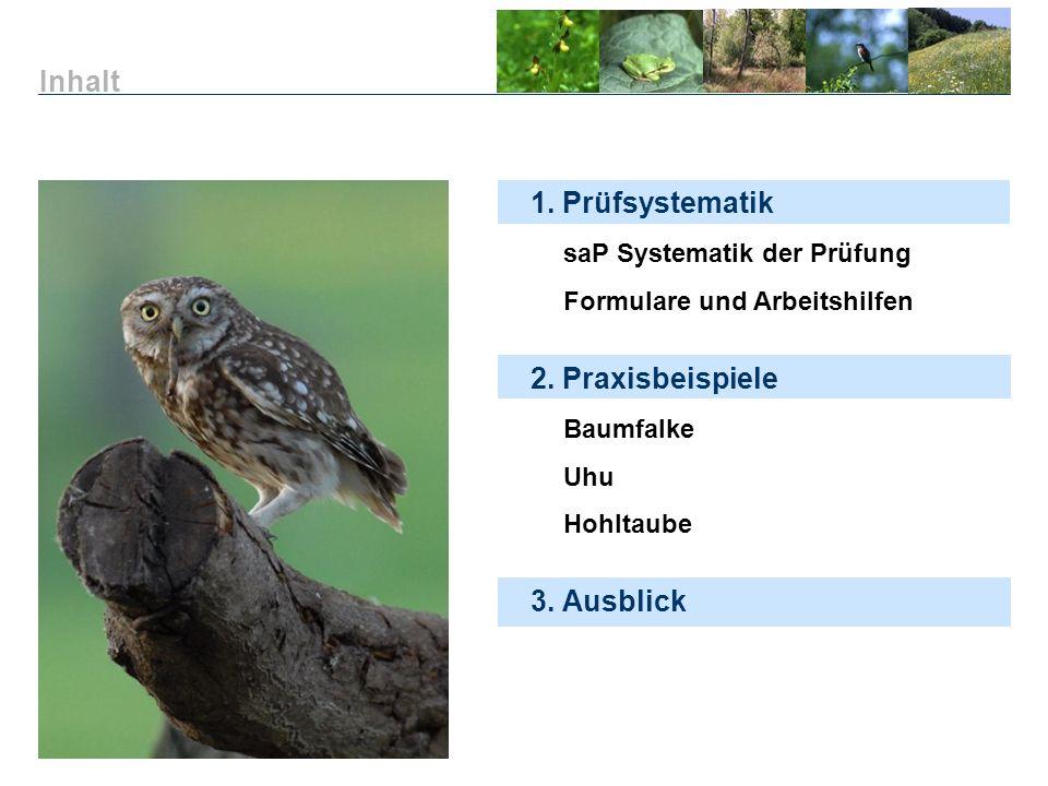 1. Prüfsystematik saP Systematik der Prüfung Formulare und Arbeitshilfen 3. Ausblick Inhalt 2. Praxisbeispiele Baumfalke Uhu Hohltaube