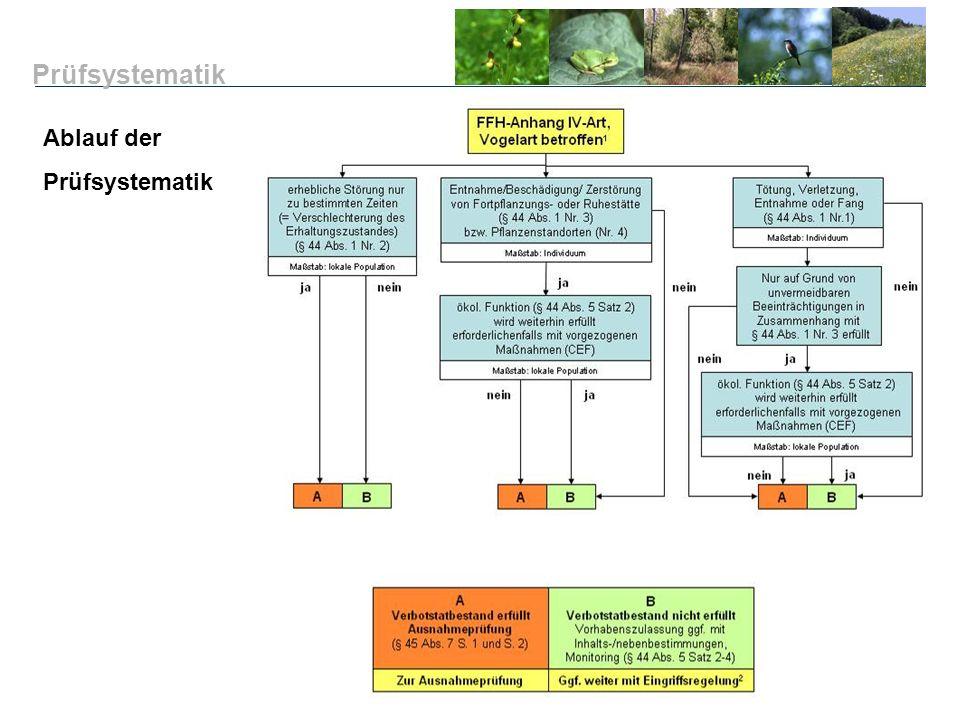 Ablauf der Prüfsystematik