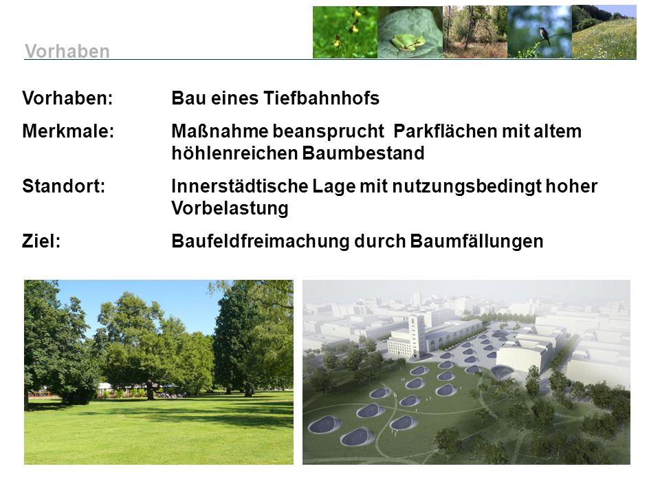 Vorhaben: Bau eines Tiefbahnhofs Merkmale:Maßnahme beansprucht Parkflächen mit altem höhlenreichen Baumbestand Standort: Innerstädtische Lage mit nutz