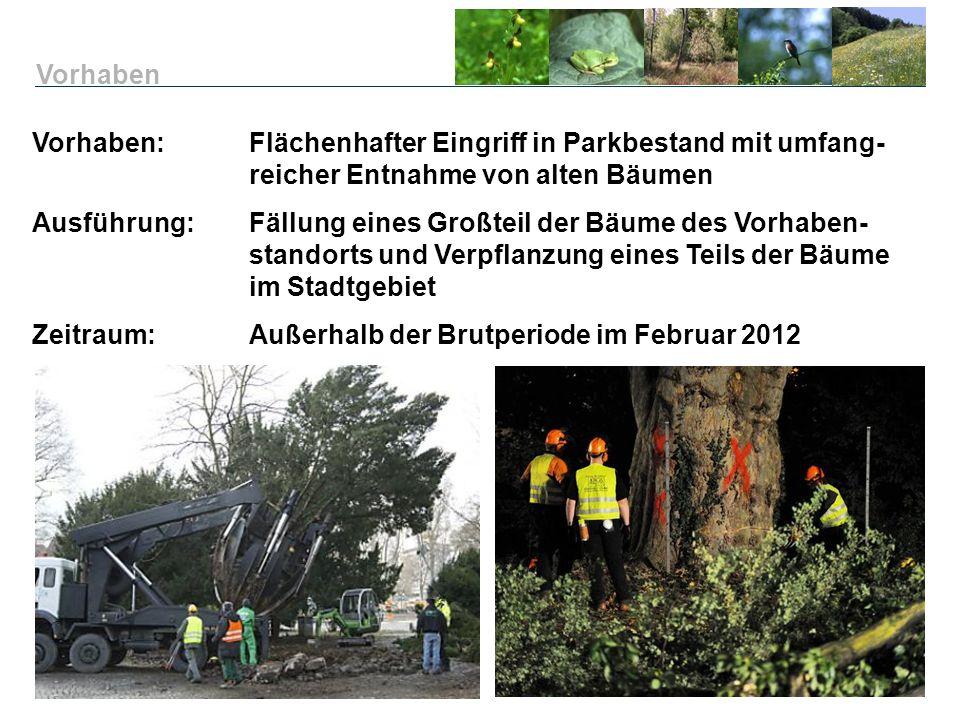Vorhaben: Flächenhafter Eingriff in Parkbestand mit umfang- reicher Entnahme von alten Bäumen Ausführung:Fällung eines Großteil der Bäume des Vorhaben