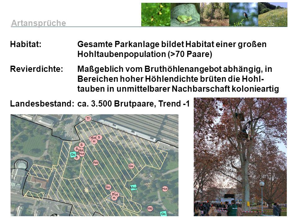 Habitat: Gesamte Parkanlage bildet Habitat einer großen Hohltaubenpopulation (>70 Paare) Revierdichte:Maßgeblich vom Bruthöhlenangebot abhängig, in Be