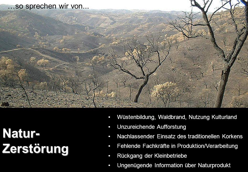 Pardel- Luchs Iberischer Luchs Niederwaldspezialist Stand 2002: noch ca.